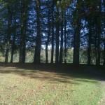Razende gedachten in het bos