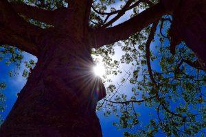 zonnestraal schijn jouw licht