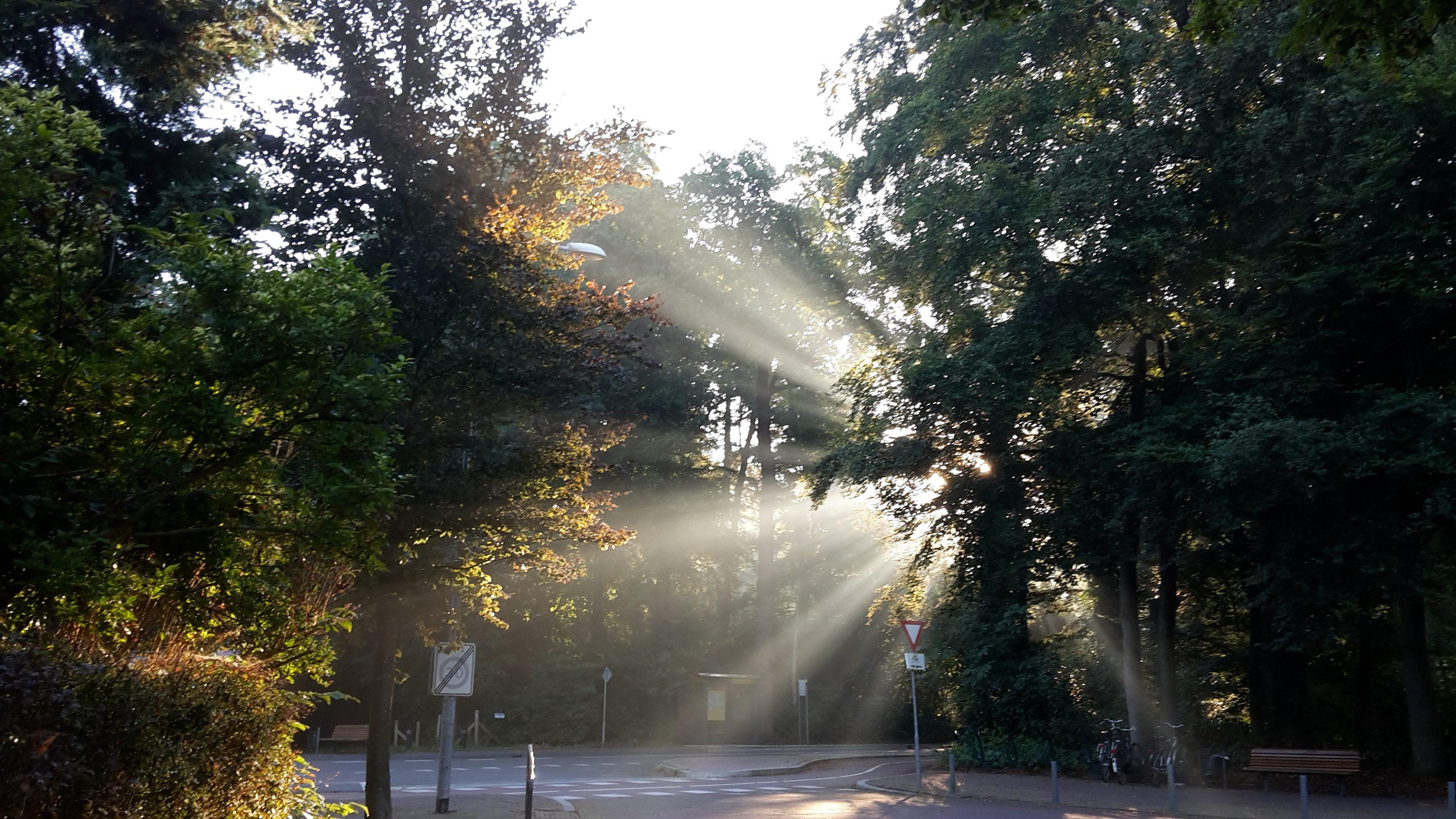 shine your light-overvloed