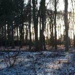 Snow silence… de verstilling van sneeuw